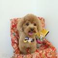 DOG'S ROOM aisani