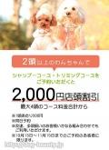 【2頭以上のわんちゃんで2000円店頭割...