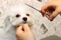 DogCafe PREGO プレゴ (カフェ トリミング ホテル 一時預かり有り 診療所 仔犬販売)