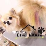 dog salon Elua House