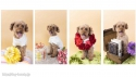 Trimming Salon K's DOG