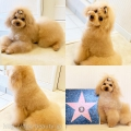 Dog Beauty ASLAN