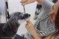 GRASS DOG&CAT 安満遺跡公園店