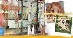 Dog Salon POOCHIE'S