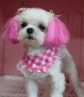 ピンクカラーで女の子らしく