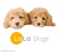 LaLa Dogs 三鷹店