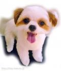 cute☆purin