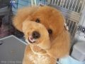 Dog's Shampoo APRICOT