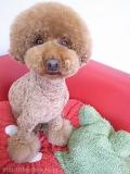 Ari's Dog