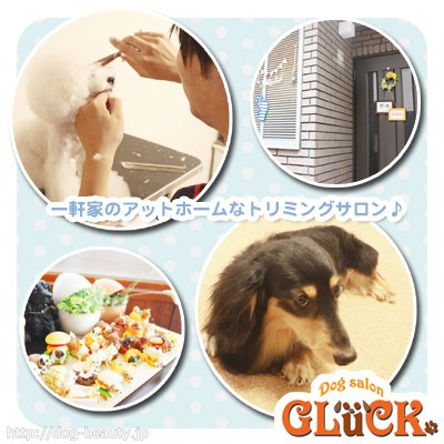 Dog Solon GLuck