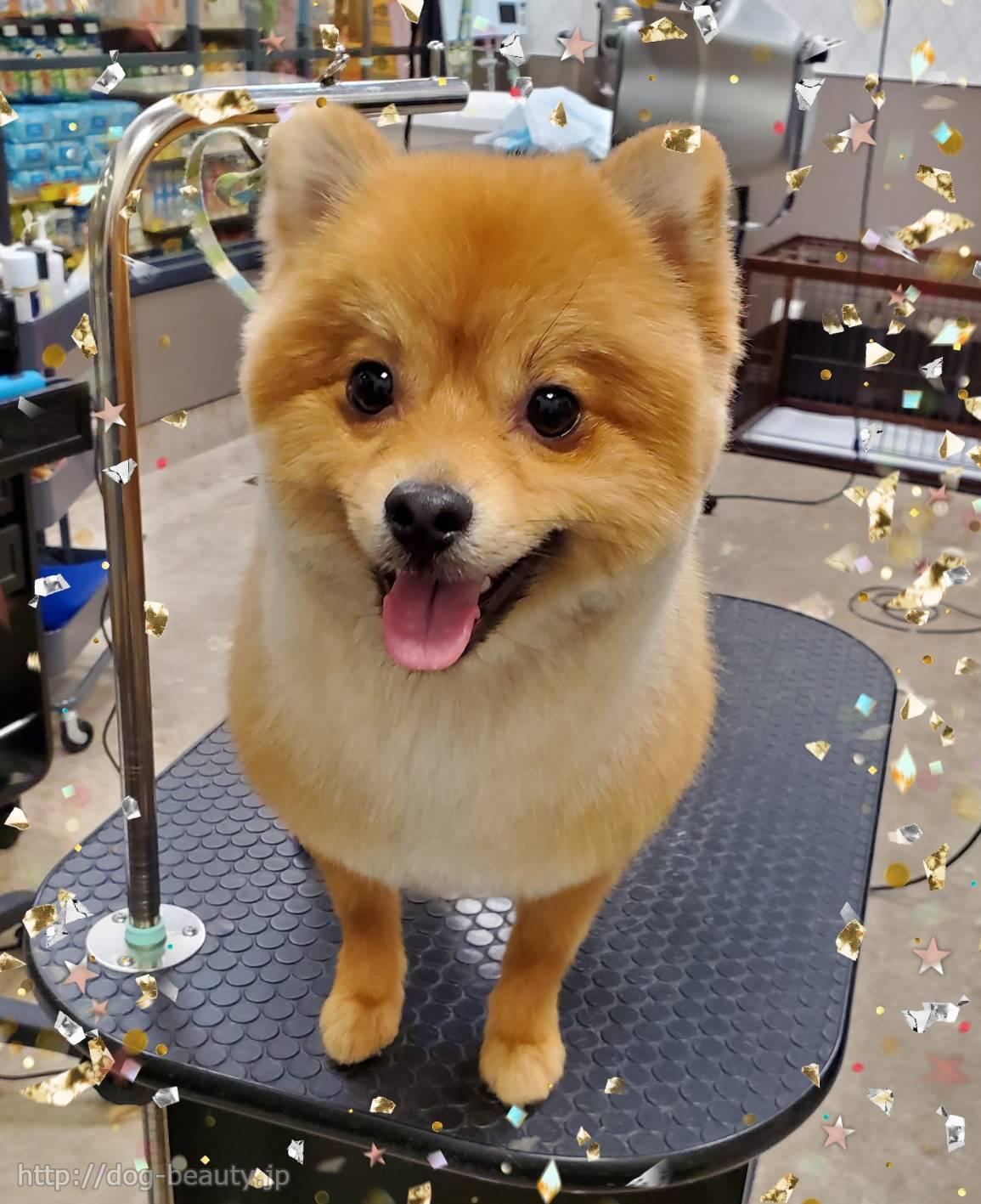 柴犬カット☆