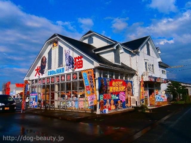 ペットショップCoo&RIKU 鳥取店