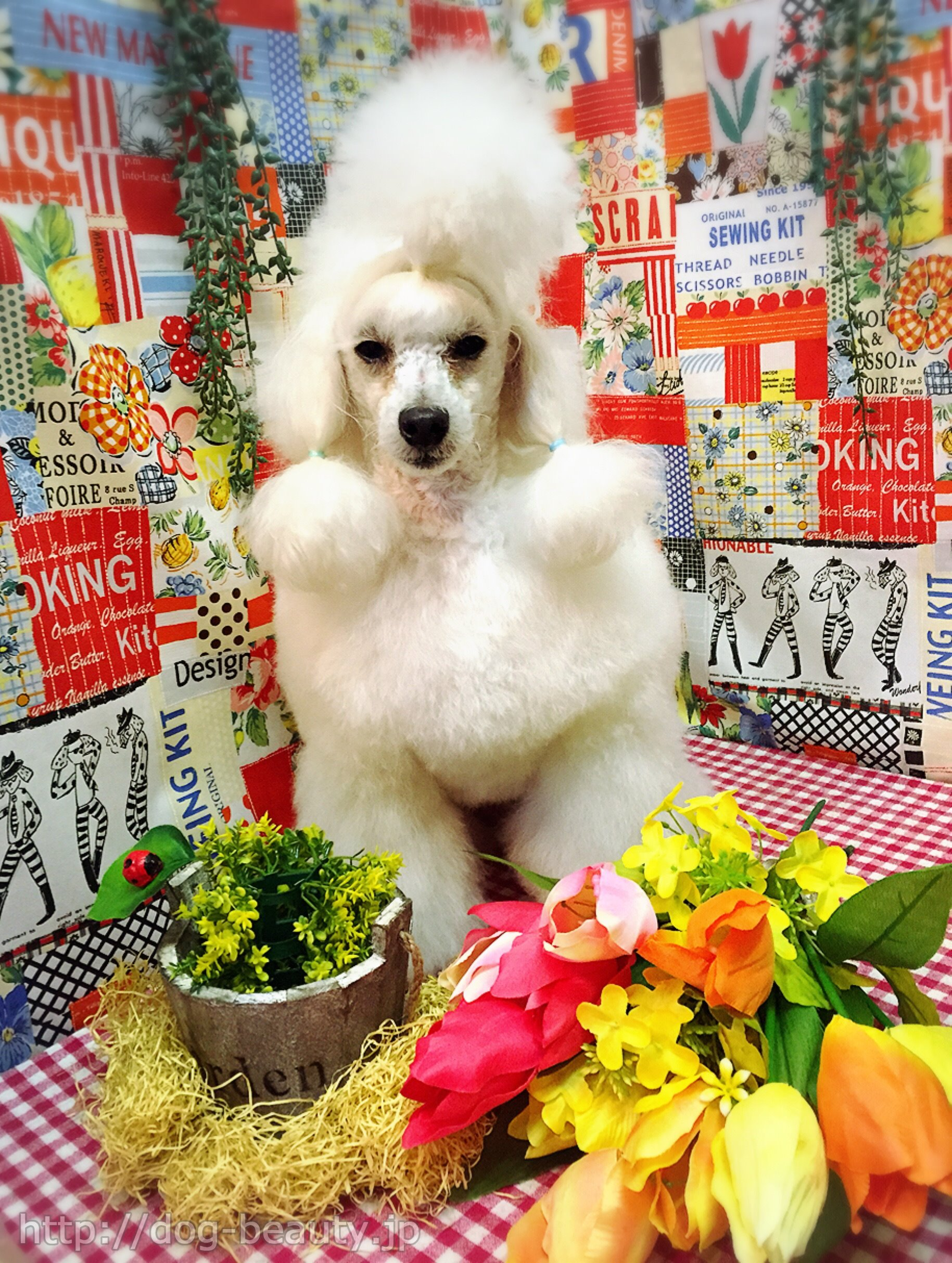 Dog Salon POCORON