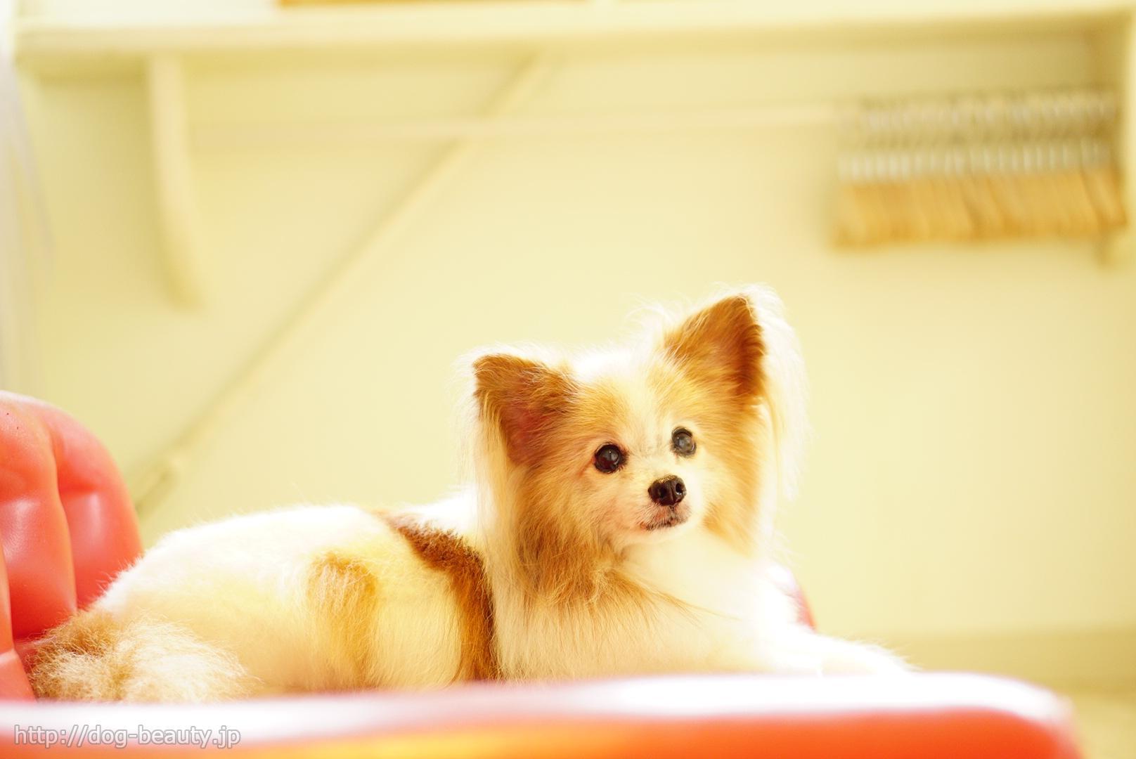 Dog・space Cutie!