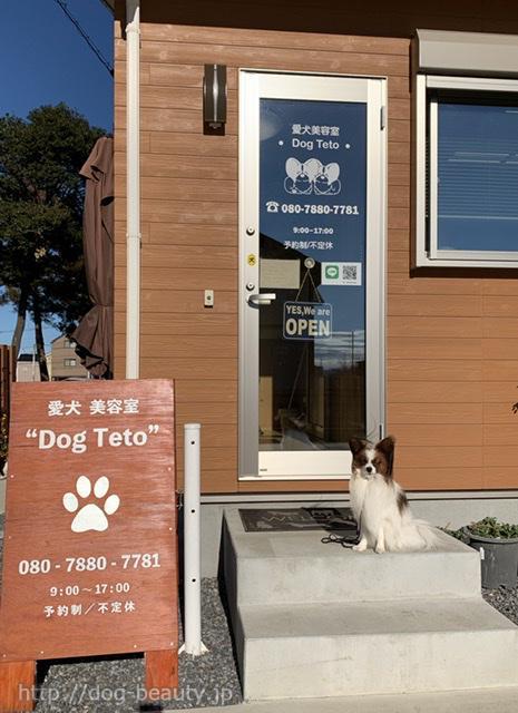 Dog Teto