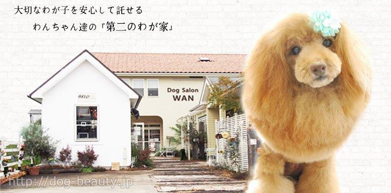 DogSalonWAN